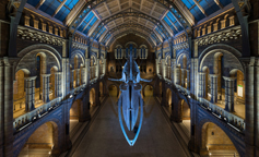 National History Museum - Hintze Hall / London